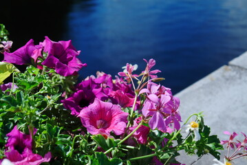 Blurred foreground and blurred background, pink summer flower arrangement, planted on a gray wall, in the background blue shining water, a beautiful contrast of colors