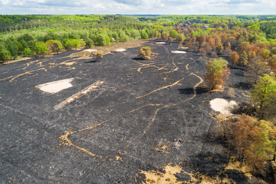 Aerial view of burned forest and heath area after the immense wildfire of April 2020, Meinweg national park, Herkenbosch, Limburg, Netherlands