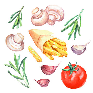 Hand drawn watercolor french fry in paper wrapping with tomato, garlic, mushroom and rosemary,