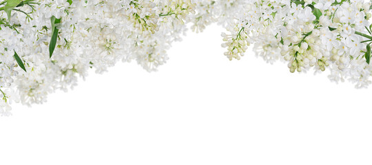 Foto op Canvas Bloemen isolated pure white lush lilac stripe