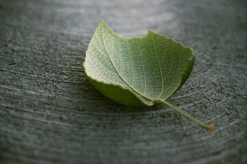 One green leaf on sidewalk with textures