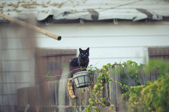 Black cat in a basket on fence