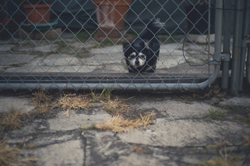 Small lonesome dog behind fence
