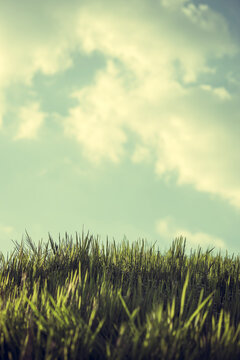 Vintage nature background with grass and fluffy clouds