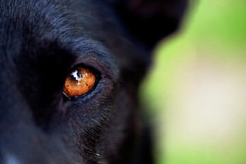 Extreme close-up of brown dog's eye loking straight at the camera