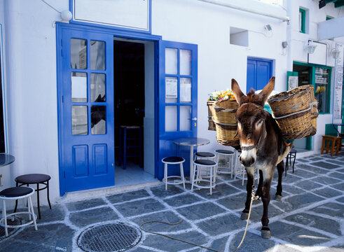 Donkey carrying baskets. Mykonos. Greece.