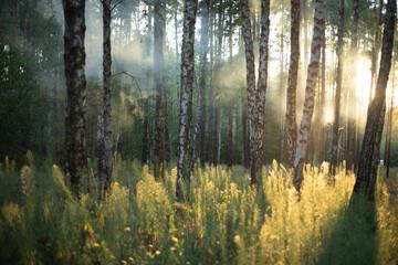 Morning fog in the light summer forest. - 375000295
