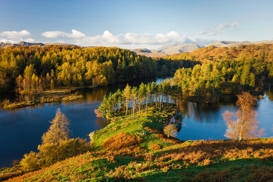 Autumn colours at Tarn Hows nearr Hawkshead, Lake District, Cumbria, England, UK