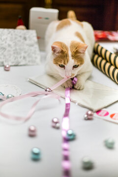 Cat grabs ribbon on table where someone is wrapping christmas presents