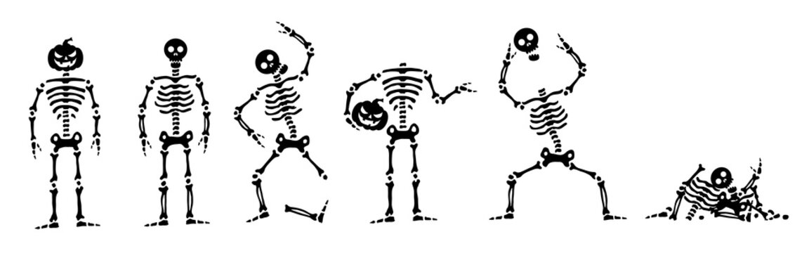 Set of skeletons for halloween. Vector skeleton in different positions. Isolated on white background. Vector illustration.