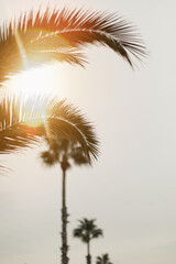 details of palm with sunshine