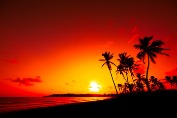 The sun sets over the horizon on a beautiful tropical beach. Silhouettes of tall palm trees against the background of a red sunset sky.  Punta Cana, Dominican Republic