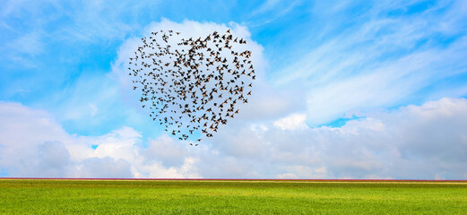 Silhouette of birds (Heart of shape) flying above the green grass field