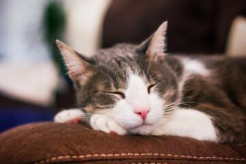 Beautiful domestic cat sleeping on the sofa.