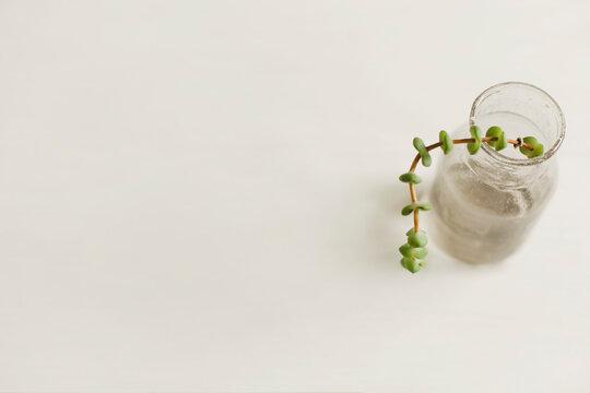 Trailing Succulent Branch in Mini Glass Vase