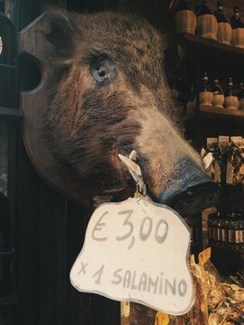 A wild boar head in a butcher store in Tuscany, Italy