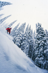Man tree skiing powder snow in winter mountains of Rogers Pass,