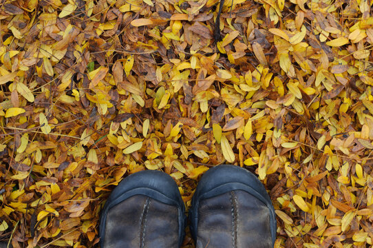 feet standing on fallen yellow ash leaves in autumn