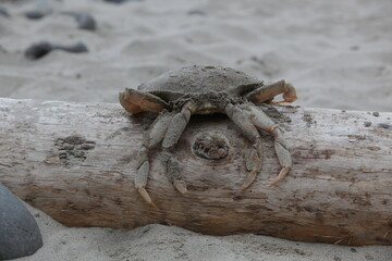 Crab In The Sand On A Beach