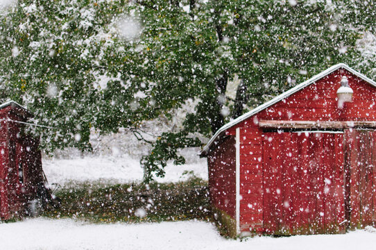 snow flakes falling near a red barn