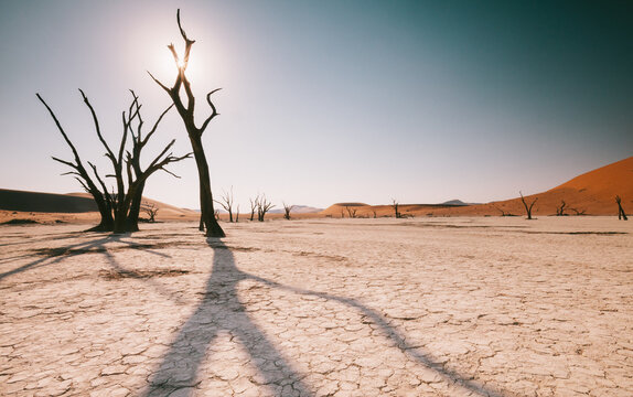 Deadvlei pan in Sossusvlei, Namibia