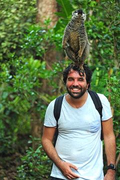 Madagascar, Andasibe, ile aux lemuriens, Common Brown Lemur (Eulemur fulvus fulvus) on tourist head