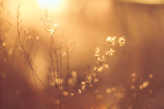 Abstract photography, Silhouettes of small plants in the sunset