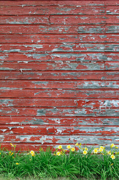 weathered red-painted wall with yellow flowers