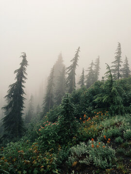 Foggy Trees and Wildflowers