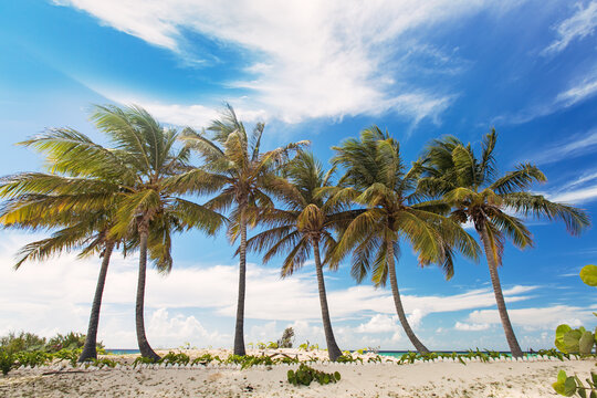 Line of tropical palm trees against a vibrant blue sky