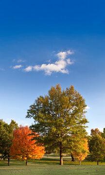 Autumn Trees Landscape with Blue Sky