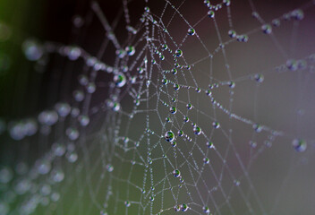 Close up of a spider web filled with droplets with a green background