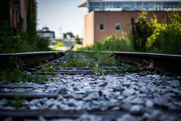 Plants growing on railroad tracks