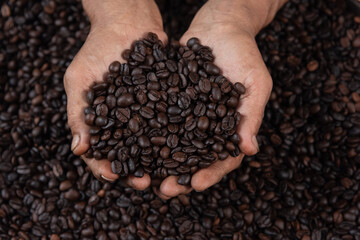 Hands are holding coffee beans. Farm Agricultural products from hill tribe.