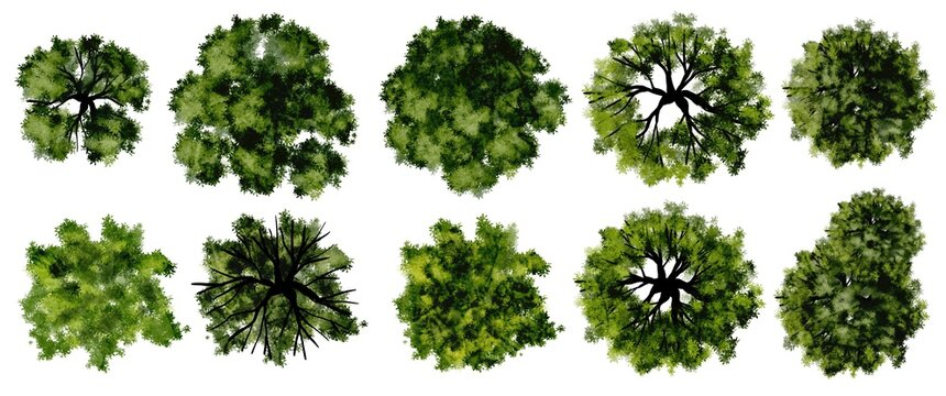 Set of watercolor tree top view for landscape plan and architecture layout