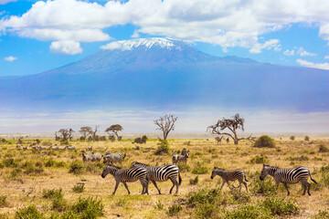 Papiers peints Zebra Large herd of zebras graze
