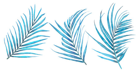 Leaves collection, leaves isolated on white background. Hand drawn elements for floral tropical design. Wall mural