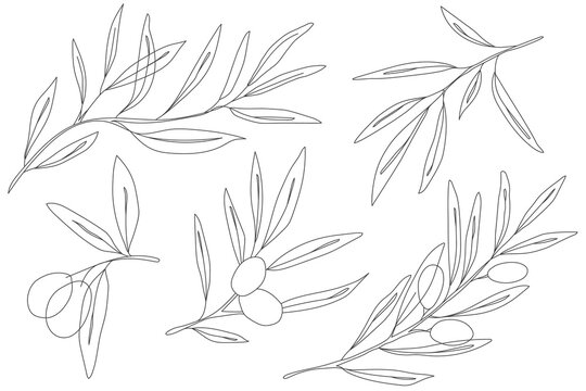Olive branch engraving vector illustration. Graphic olive collection. one line drawing