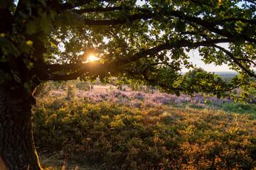 fairytale autumn landscape with purple flowers