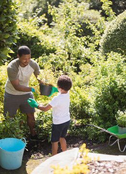Father and son gardening in sunny summer garden