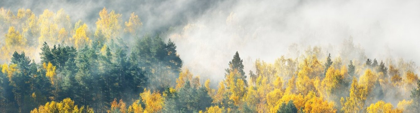 Breathtaking panoramic aerial view of the colorful golden mixed coniferous forest and river in a clouds of fog at sunrise. Stunning autumn landscape. Picturesque scenery. Pure nature, travel, tourism