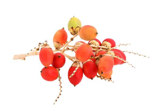 areca or betel palm fruit isolate on white background
