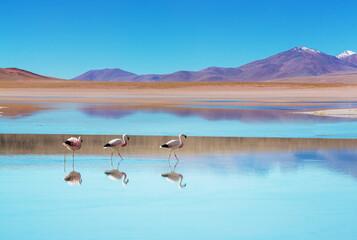 Photo sur Plexiglas Fleur Flamingo