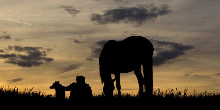 coucher de soleil silhouette d'un cheval et d'un cavalier ou cavalière indian elephant