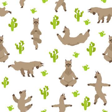 Camelids family collection. Alpaca yoga graphic design