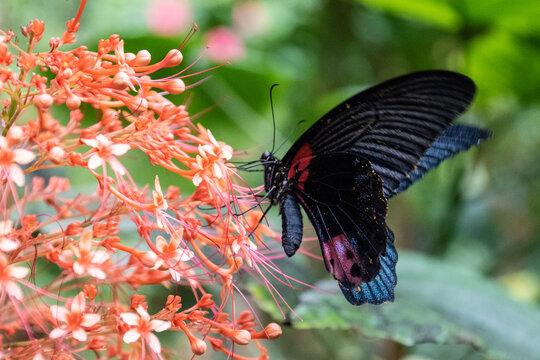 honfleur naturospace papillon serre à papillons feuille nature swallowtails