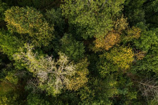 Der Mischwald in Deutschland hat wegen der anhaltenden Trockenheit lichte Kronen