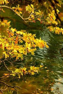 Dans la forêt d'automne à Paris , France