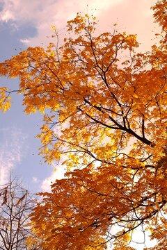 l'air d'automne à Paris, France
