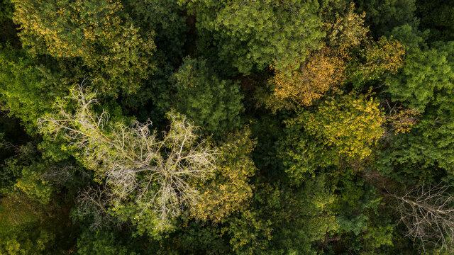 Luftbild einer lichten Krone eines Baumes in einem grünen Mischwald in Deutschland